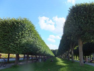 ヨーロッパの森