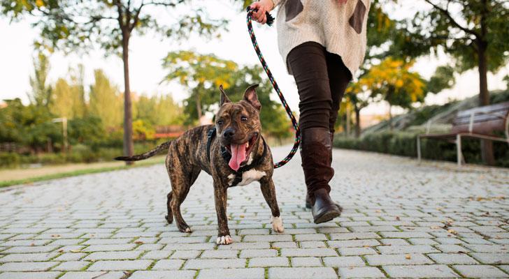 すっぴんで犬の散歩中