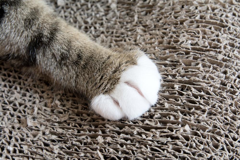 猫にひっかかれる夢