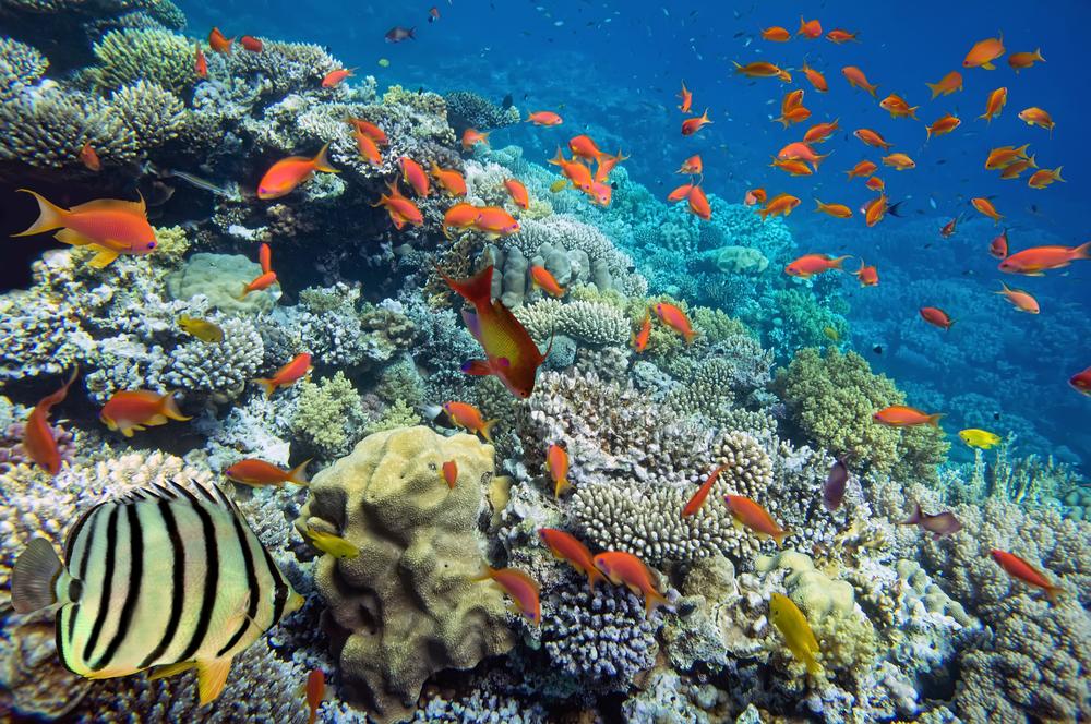 熱帯魚の夢
