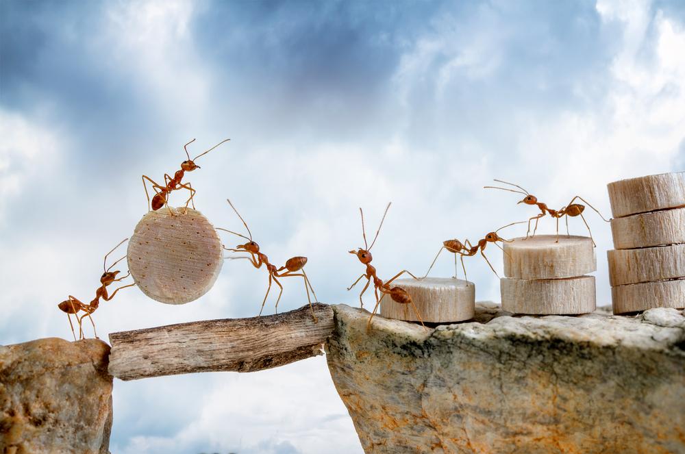 蟻が物を運ぶ夢