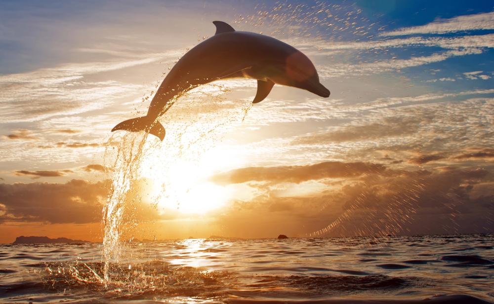 イルカと一緒に泳ぐ夢