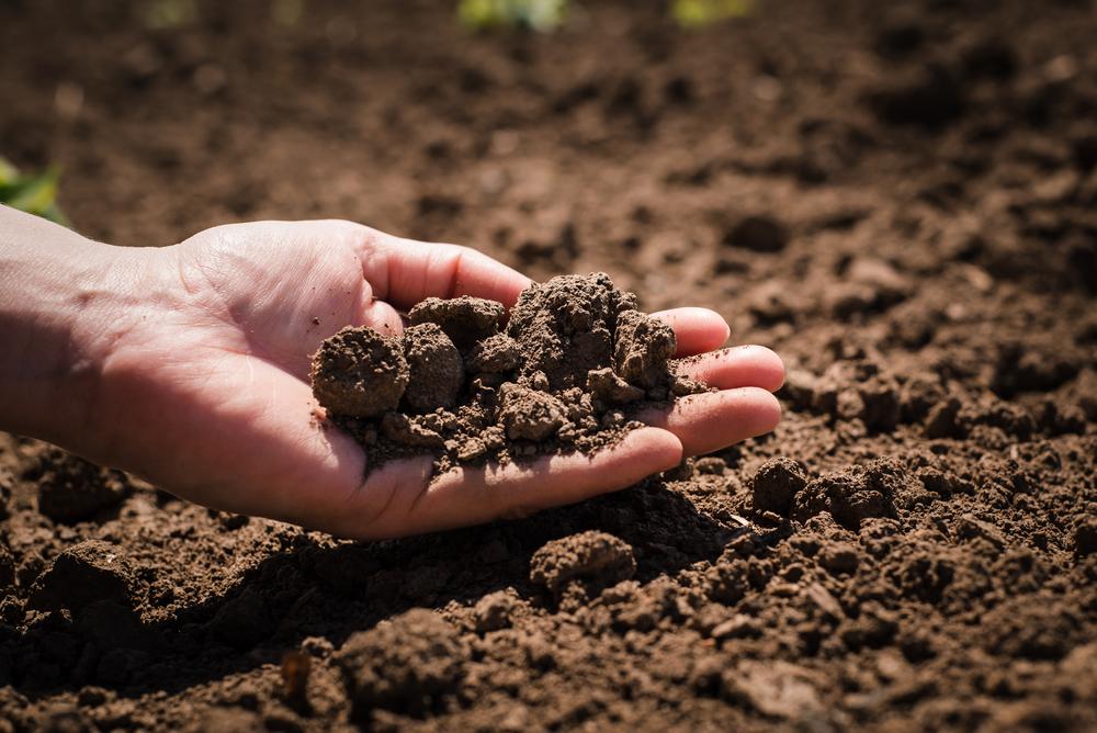 初心者の畑の土作り