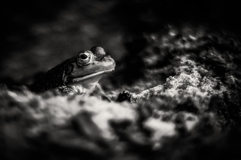 カエルの夢
